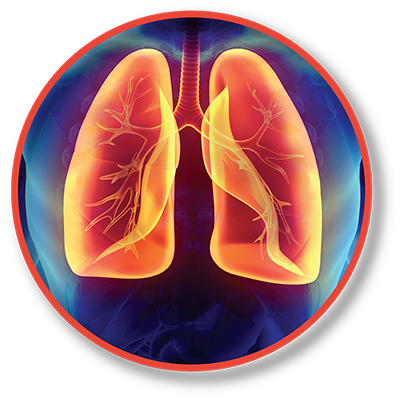 Pulmonary Icon; Red And Yellow Lungs Illustration Over Blue Background